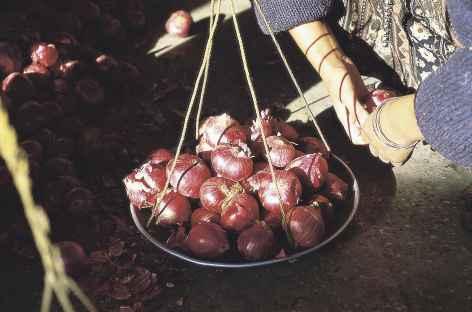 Vente d'oignons sur le marché de Thimphu - Bhoutan  -