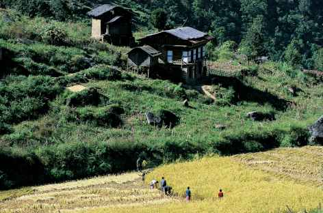 Descente vers Punakha - Bhoutan -