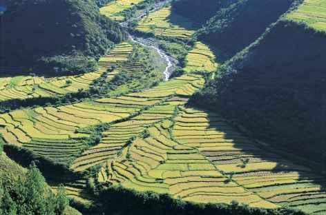 Cultures en terrasses - Bhoutan -