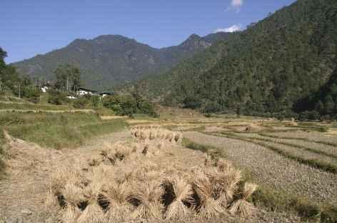 Moissons - Bhoutan -