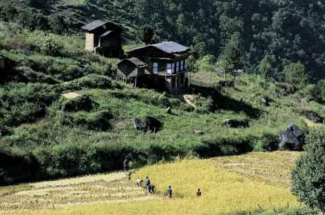 Récoltes - Bhoutan -
