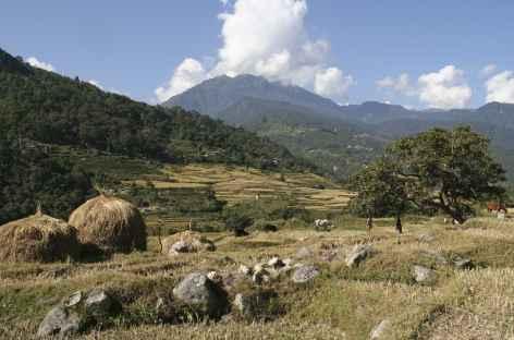 Campagne Bhoutanaise - Bhoutan -