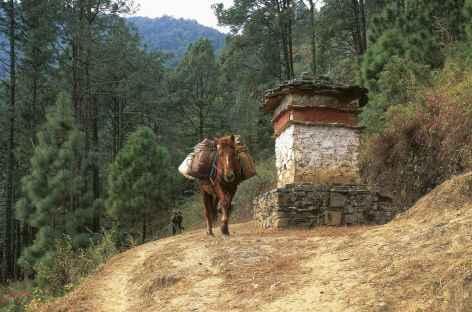 Sentier entre Tharpaling et Lame Gonpa - Bhoutan -