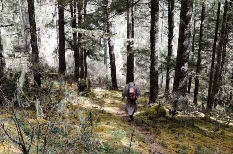 Descente vers Haa - Bhoutan -