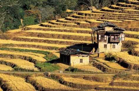 Rizières en terrasses - Bhoutan -