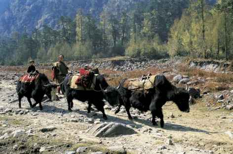 Pays Brokpas - Bhoutan -