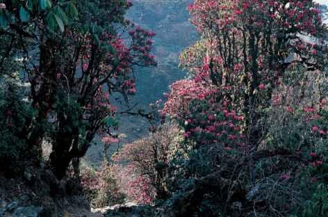 Forêt près de Merak - Bhoutan -