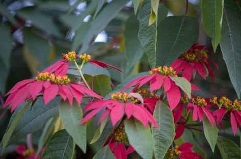 Floraison en automne -