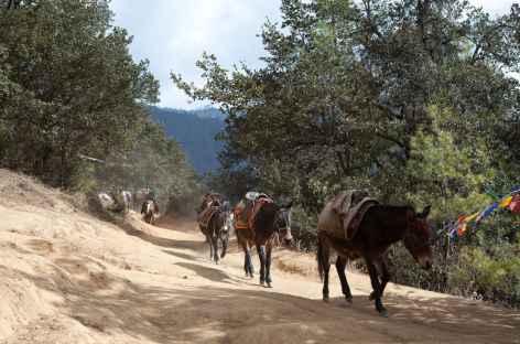 Sur le sentier qui monte à Taktsang -