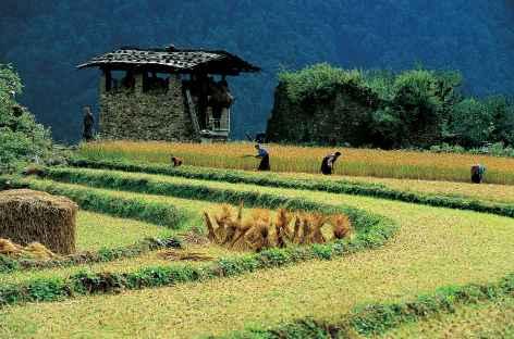 Rizières de Goem Tamji - Bhoutan -