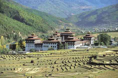 Le dzong de Thimphu parmi les rizières - Bhoutan -