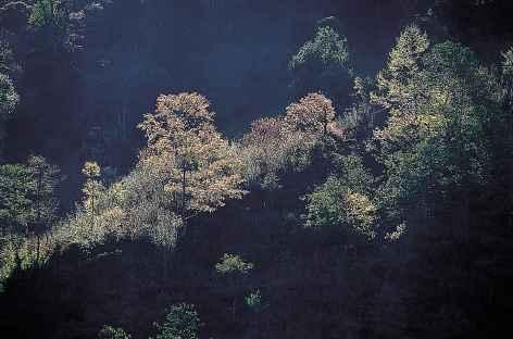 Forêt entre Gasa et Koina - Bhoutan -