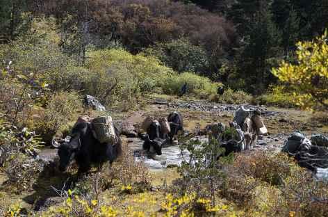Caravane en route vers Laya - Bhoutan -