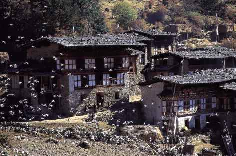 Village de Laya - Bhoutan -
