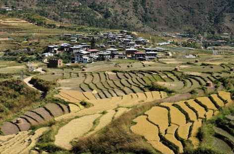 Rizières au-dessus de Lobeysa - Bhoutan -