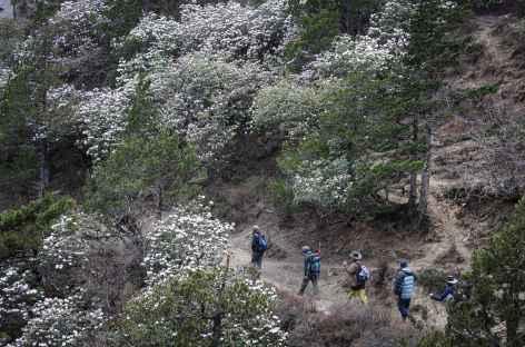 Sentier dans les Rhodos - Bhoutan -