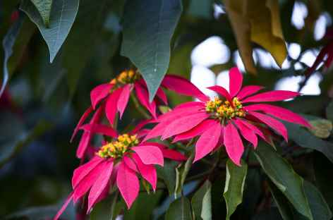 Flore tropicale - Bhoutan -