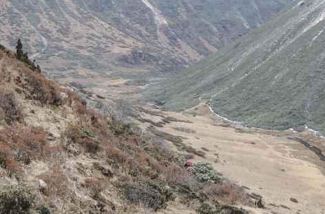 Descente du Thonle La  - Bhoutan -