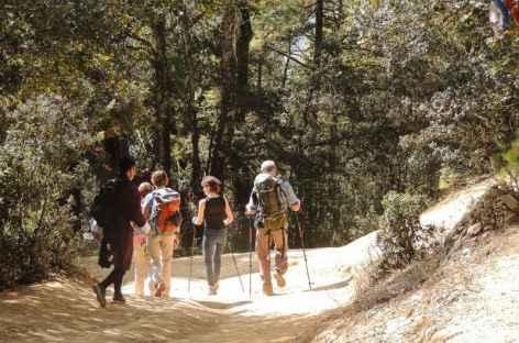 Balade en forêt - Bhoutan  -