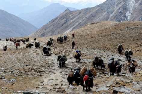 Arrivée de la caravane de yaks au col - Bhoutan -