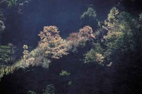 Forêt au petit matin - Bhoutan -