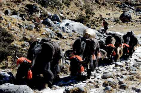Notre caravane de yaks - Bhoutan -