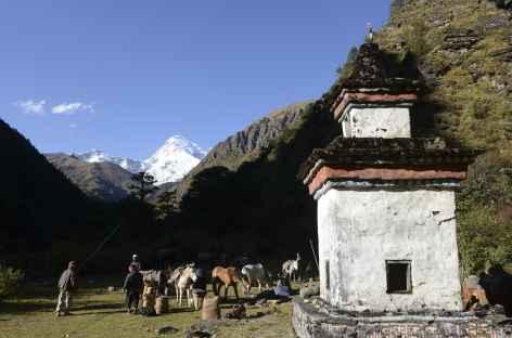 Caravane de chevaux sous le Jomolhari - Bhoutan -