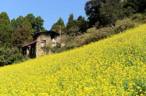 Champ de moutarde près de Trongsa - Bhoutan -