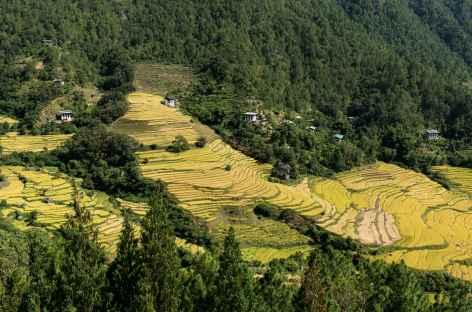 Champs en terrasses près de Mongar - Bhoutan -