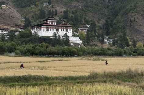 Le dzong de Paro surplombant les rizières - Bhoutan -