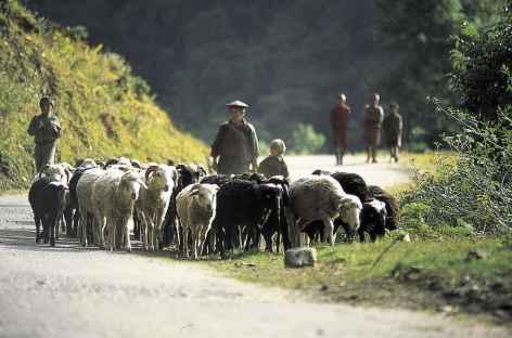 Retour des troupeaux au village - Bhoutan -