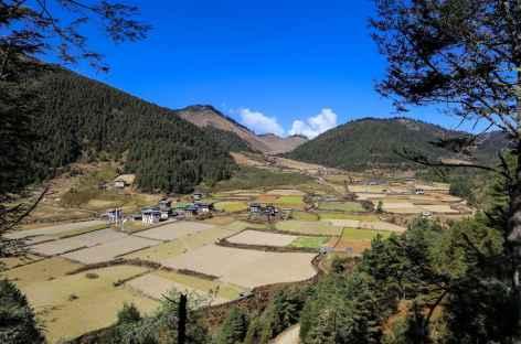 Phobjika Vallée de Gangtey  -