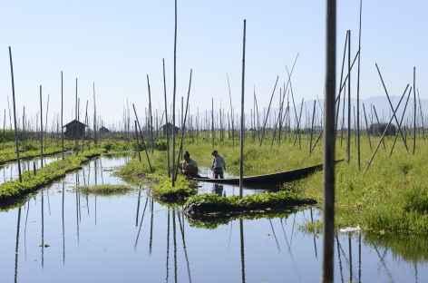 Balade entre les jardins flottants du lac Inle - Birmanie -