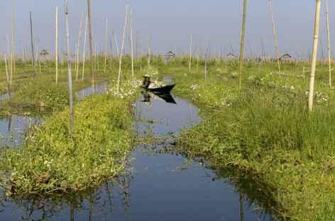 Entre les jardins flottants du lac Inle - Birmanie -