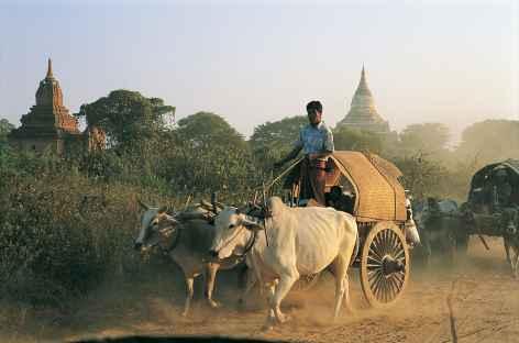 Char à buffles parmi les temples de Pagan - Birmanie -