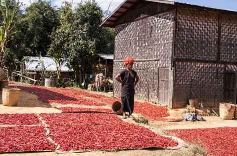 Séchage au soleil de piments locaux - Birmanie -