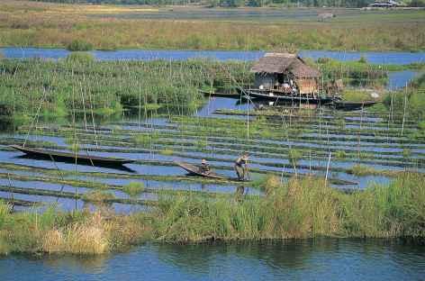 Marchés flottants sur le lac Inle- Birmanie -