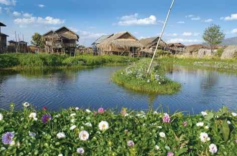 Cultures de fleurs sur les jardins flottants du lac Inle - Birmanie -