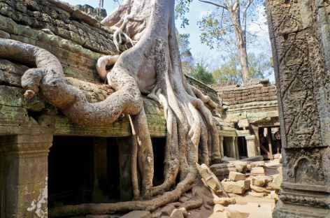 Ta Prohm et ses figuiers étrangleurs - Cambodge -