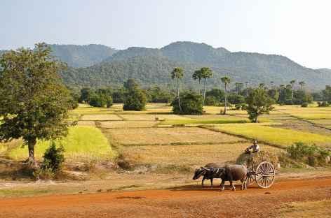 Paysage symbole de la campagne cambodgienne - Cambodge -