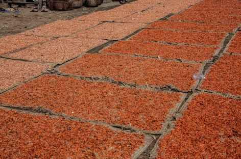 Séchage des crevettes au bord du lac Tonle Sap - Cambodge -