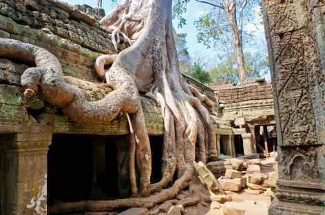 Le site de Ta Prohm envahi par les fromagers- Cambodge -