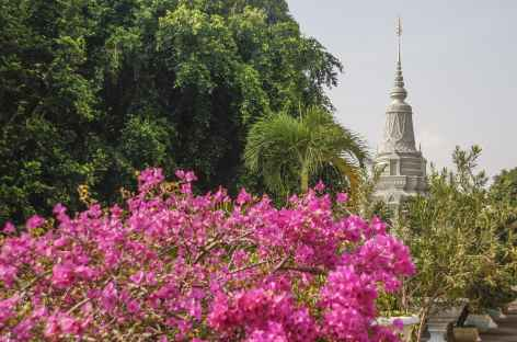 Bougainvillier et emple à Phnom Penh - Cambodge -