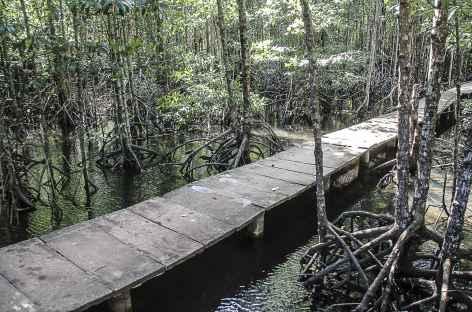 Balade au milieu des palétuviers - Cambodge -