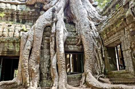 Angkor, le temple de Ta Prohm - Cambodge -