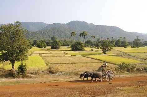 Char à boeufs dans les campagnes - Cambodge -