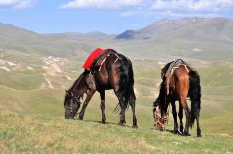 Le cheval est l'élément le plus important pour le nomade kirghize -