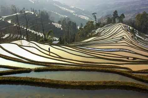 Rizières de Yuanyang - Yunnan, Chine -