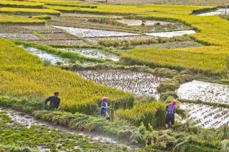 Sur route de Dong Chuan Yunnan-Chine -