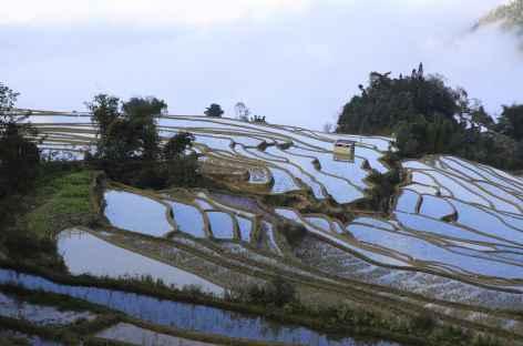 Rizieres de YuanYang Yunnan -